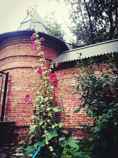 Ivy Plant Growth Architecture Built Structure Low Angle View Day No People Building Exterior Outdoors Tree Flower Branch Beauty In Nature Window Box Sky Nature