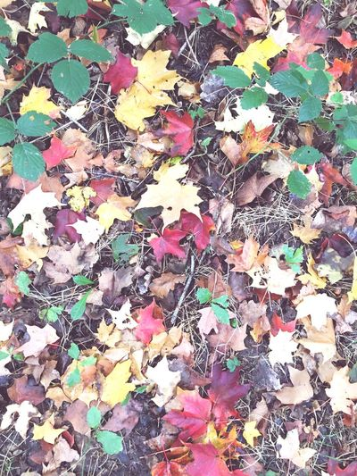 Autumn Change Autumn Leaf Season  Leaves Dry Falling Fallen Large Group Of Objects Multi Colored Abundance Variation High Angle View Close-up Day Natural Condition Nature Group Of Objects Outdoors Tranquility Forest Sunday Walking Around
