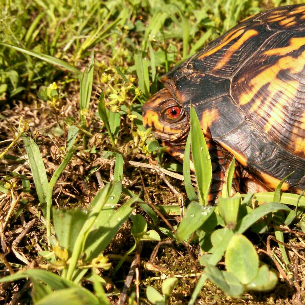 The Purist (no Edit, No Filter) EyeEm Nature Lover Turtle I See You