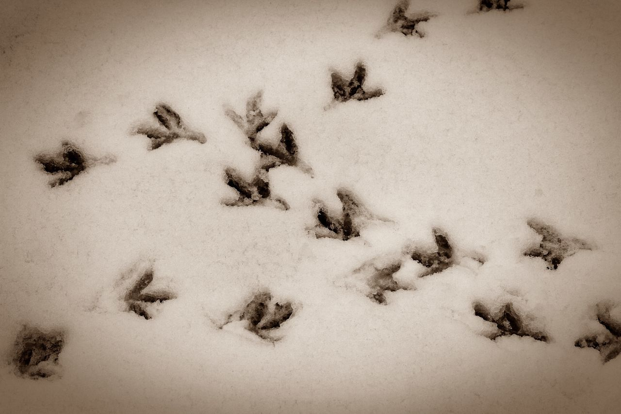snow, winter, cold temperature, high angle view, paw print, nature, animal themes, no people, field, dog, day, outdoors, mammal