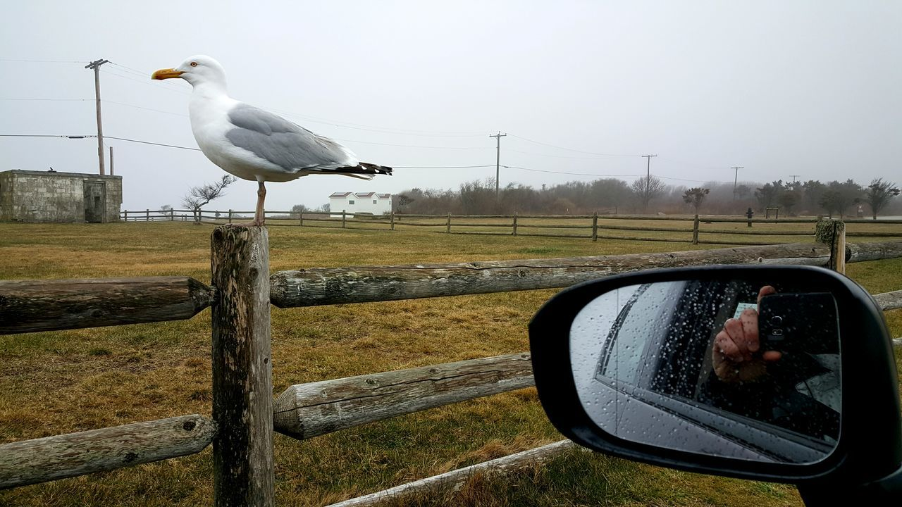 Seagull On Fence Taking Photos From My Car Beavertail State Park Jamestown, RI USA Rhode Island Photography Overcast Skies Overcast Weather ❤ Coastal_collection S6