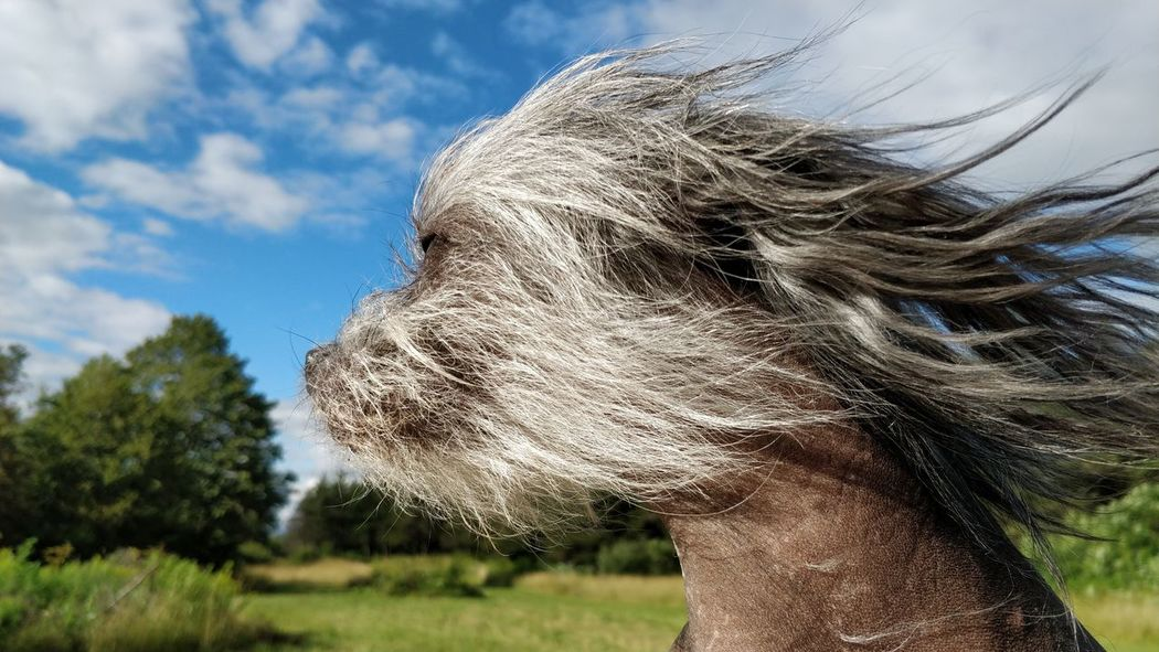 """Take these broken wings And learn to fly again And learn to live so free And when we hear the voices sing The book of love will open up And let us in"" Mr. Mister Themightyodin Dog Outdoors Pets Chinese Crested Dogsofclicktozen"