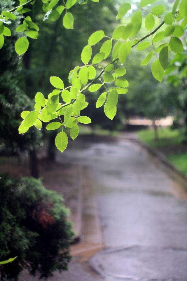 2016 Summer Rainy Day Light Drops