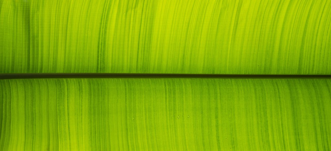 Leave Me. Backgrounds Green Color Full Frame Freshness Close-up Nature Greenhouse Serres De Laeken (Brussels). Brussels❤️ Brussel Brussels Royal Greenhouse Banana Tree Leaf Flowerporn Bruxellesmabelle Flower Collection Flora Textured  Belgium Belgique Belgium. Belgique. Belgie. Belgien. Etc. Beauty In Nature Green Color