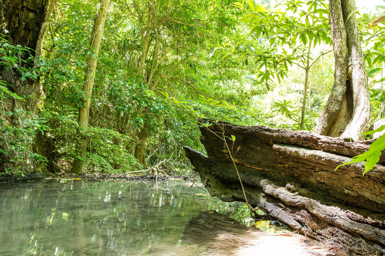 tree, nature, water, forest, outdoors, day, tranquility, no people, green color, beauty in nature, tree trunk, growth, branch