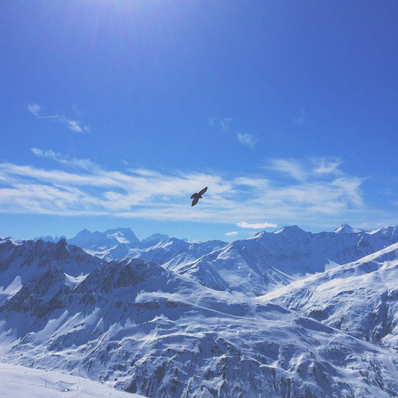Beautiful stock photos of alaska, Animal Themes, Beauty In Nature, Bird, Chambéry