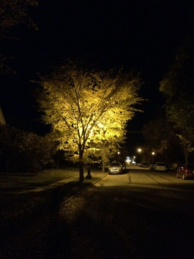 The street lamps are making the trees in the neighbourhood look magical. Check This Out Walking Around Nightphotography Street Photography