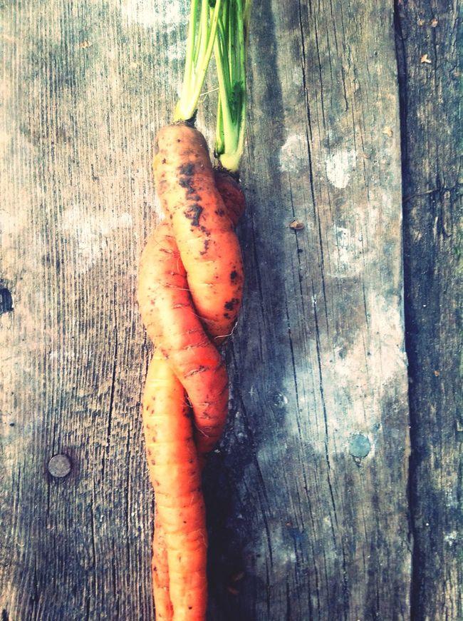 морковь морковка Carottes