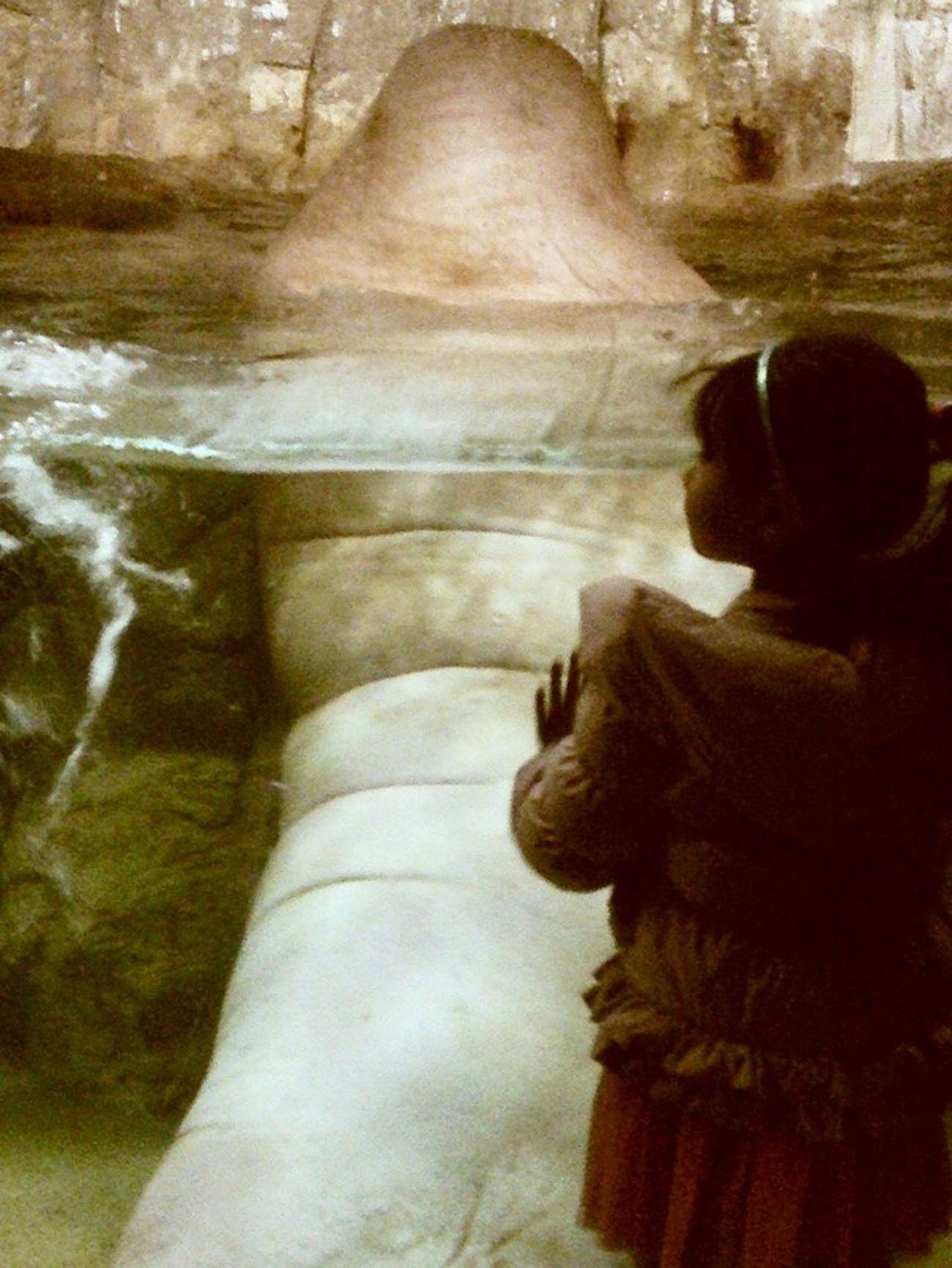 セイウチ 城崎 城崎マリンワールド 水族館 Walrus Aquarium Kinosaki Back 何の気の迷いか年明け早々に電車で片道5時間半かけて城崎マリンワールドへ