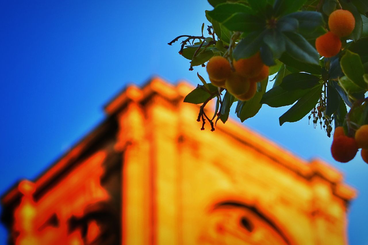 Fruits of autumn, arbutus Golden Hour In Action EyeEm Best Shots Respect For The Good Taste Nikonphotography Learn & Shoot: Simplicity Let's Do It Chic! Autumn Colors Autumn Collection Exploring New Ground Architecture Church Bells Sunset Silhouettes Open Edit There Be Dragons Nikon D7200 Street Photography Nikon Nature Textures High Angle View Nature Autumn🍁🍁🍁 14:40 ^ Top Popular Photo