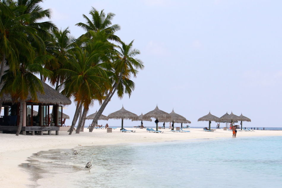 Beautiful stock photos of relax, Beach, Bird, Calm, Chance