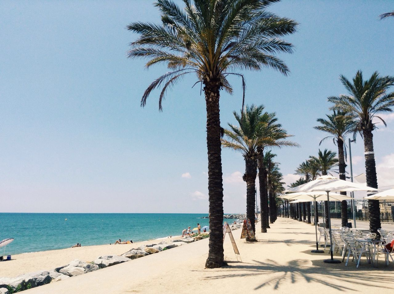 Mataró Palm Trees Summer Beach