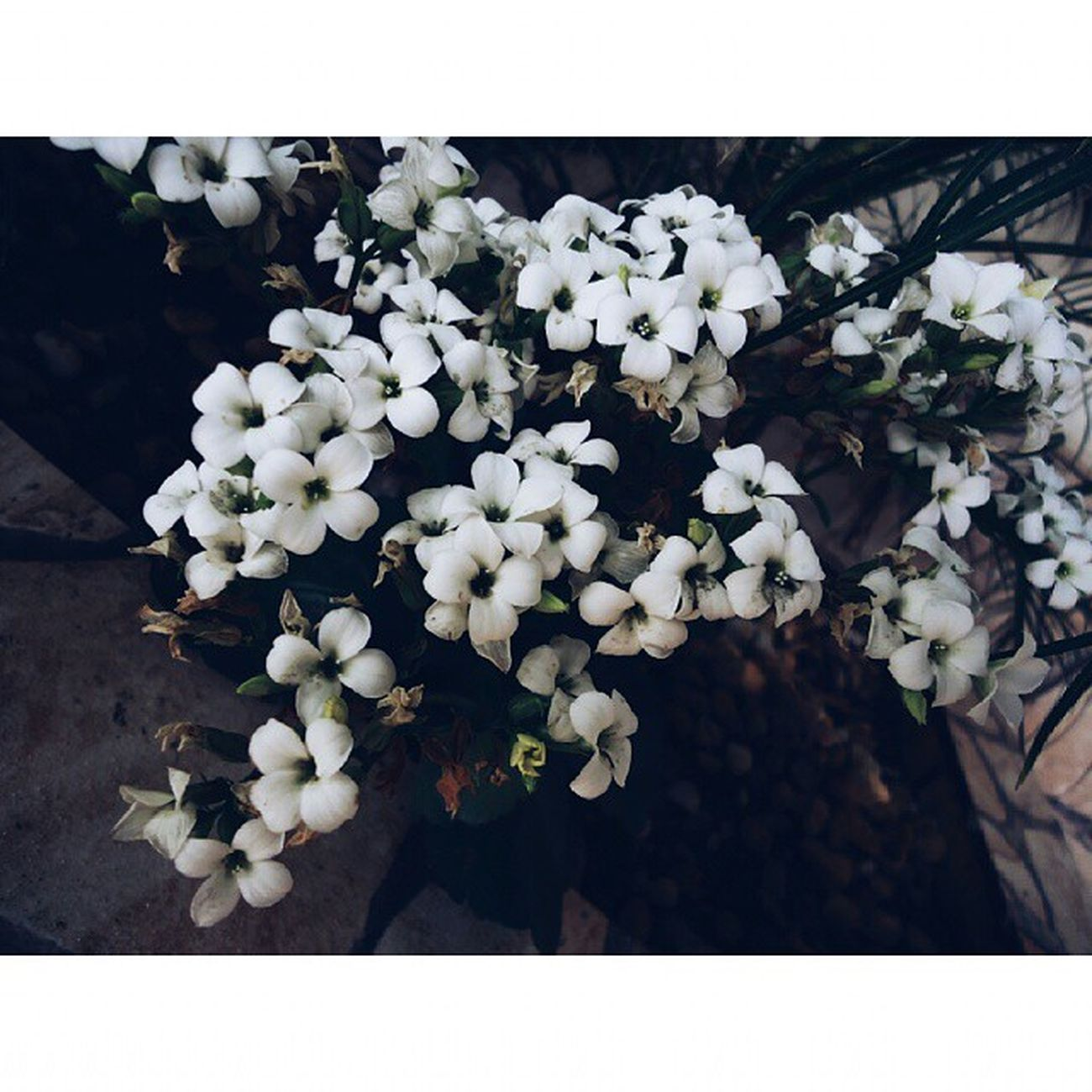 Bring me to life, wake me up ▪ Flowers ▪ Vscofeatures ▪ Vscovibe ▪ Vscobrasil ▪ vscophile ▪ vscofocus ▪ nature ▪ vscoonly ▪ vscoaddict ▪