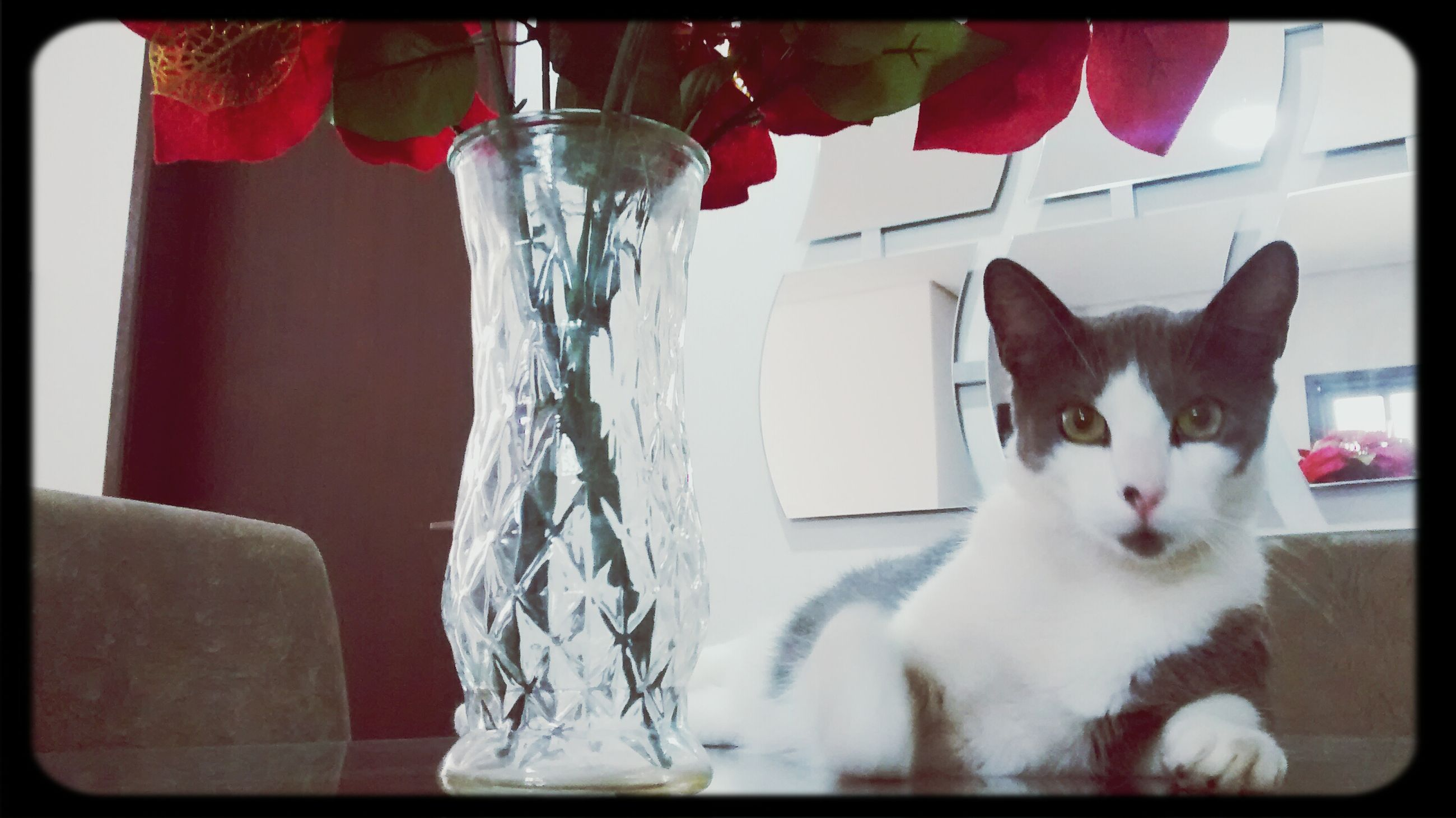 indoors, domestic animals, pets, domestic cat, transfer print, cat, animal themes, auto post production filter, home interior, table, mammal, one animal, feline, close-up, no people, glass - material, relaxation, home, chair, white color