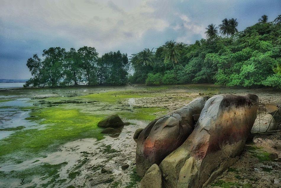 Wetlands Greenary Green Nature Chek Java Pulau Ubin Singapore Chekjawa