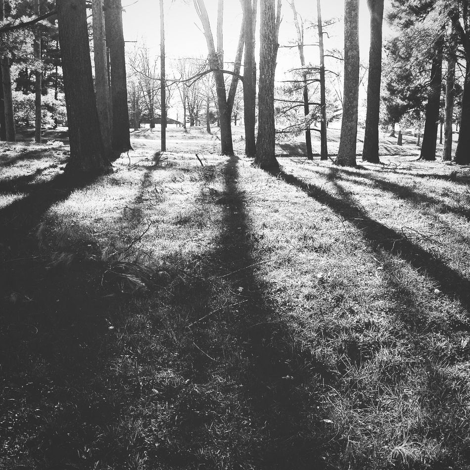 Tree Shadow Nature Forest Sunlight Day Tree Trunk Outdoors Beauty In Nature Blackandwhite Photography Bnwphotography Bnw_society Bnw_life Bnw_captures High Contrast Naturephotography Nature_collection Beauty In Nature Nature Background Tree Sunrays Sunbeam Sunray Forest Photography