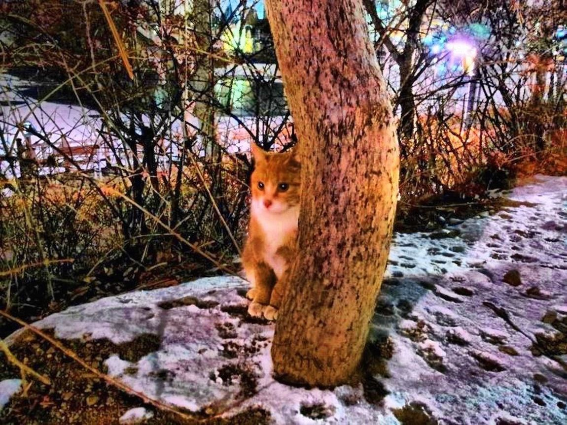 """Cat name """"mango"""" Little Cats Alley Cat A Feral Cat Cat Lovers I Love My Cat ❤ Very Cute Cat Nature Photography Winter 2016 Seoukchon Lake Cats South Korea"""