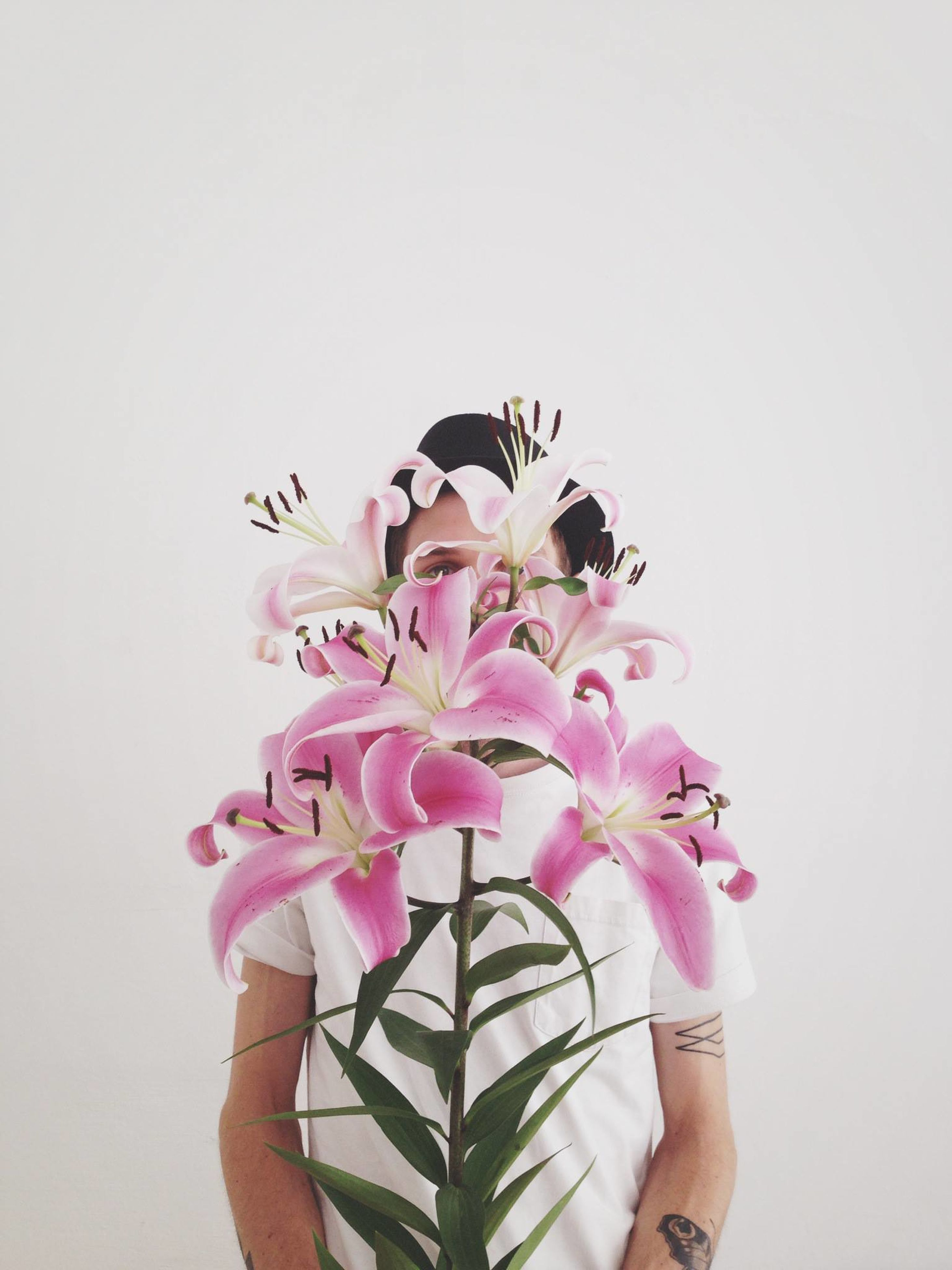 flower, studio shot, white background, one person, pink color, human body part, human hand, close-up, real people, nature, indoors, day, flower head, freshness, people