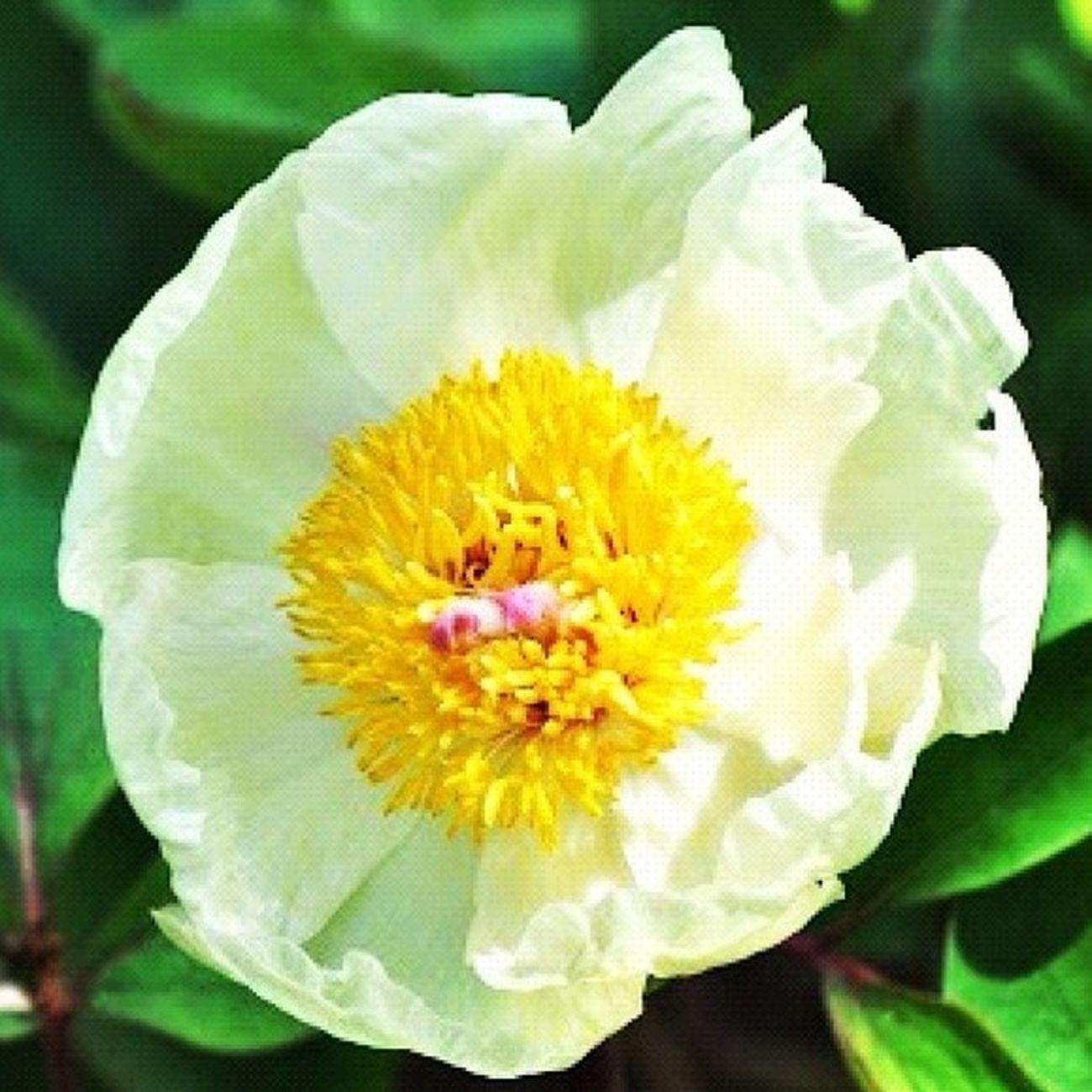 #flower#garden#nature#ecuador#santodomingoecuador#eyeEmfollowers