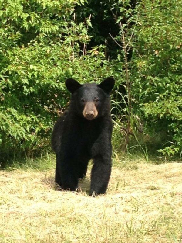 Check This Out Hi! EyeEm Nature Lover Bear Cub Bear Cubs