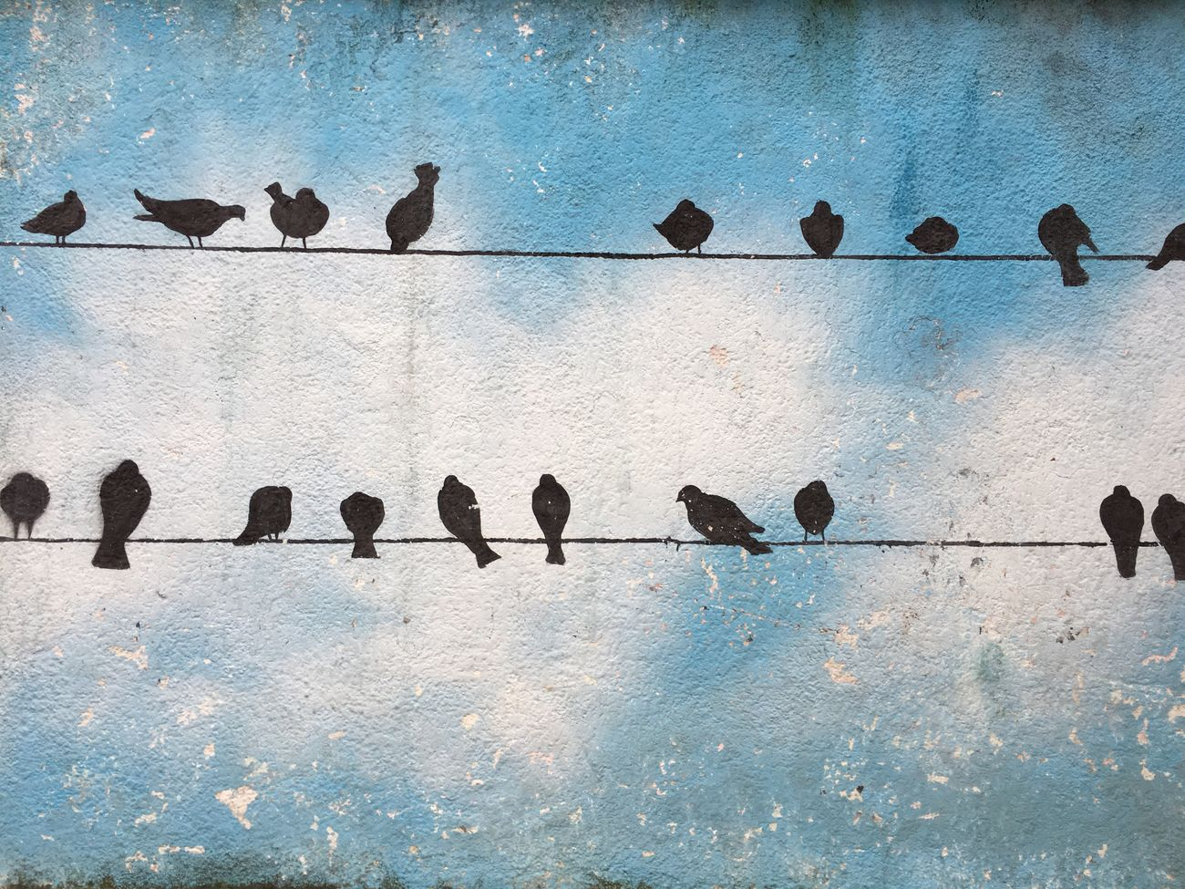 Adapted To The City Bird Shadow No People Day Animal Wildlife Animals In The Wild Sky Animal Themes Outdoors Perching Graffiti