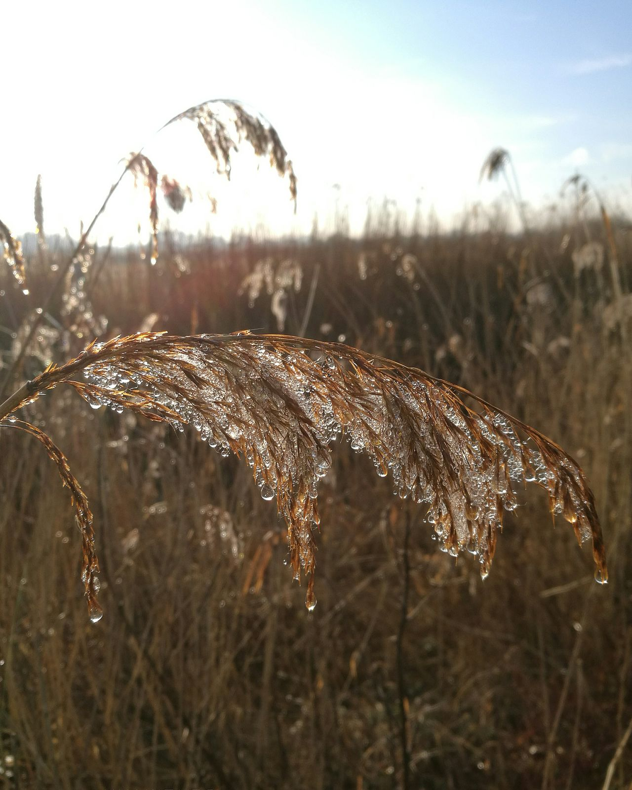 A frosty morning walk Nature Focus On Foreground Close-up Tranquility No People Sunlight Outdoors Sunset Plant Day Tranquil Scene Sky Beauty In Nature