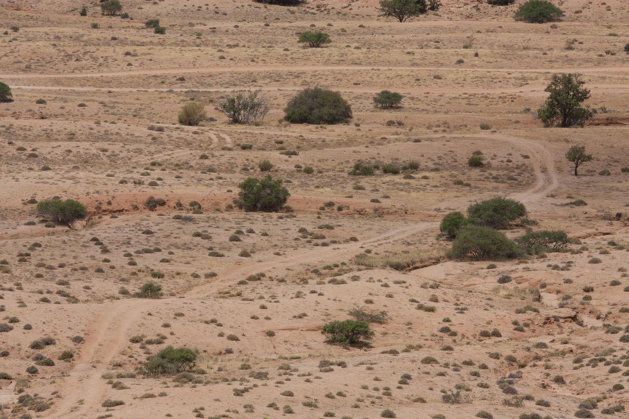 day, nature, landscape, outdoors, tree, no people, desert, arid climate, plant, scenics, sand dune, mammal, animal themes