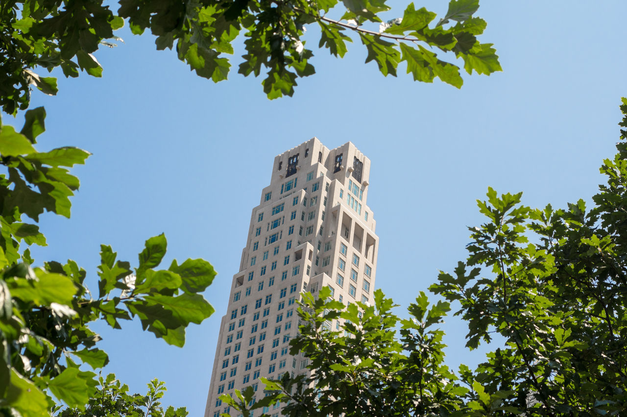 tree, growth, low angle view, architecture, leaf, day, skyscraper, built structure, plant, no people, green color, building exterior, sunlight, clear sky, outdoors, nature, branch, sky, city
