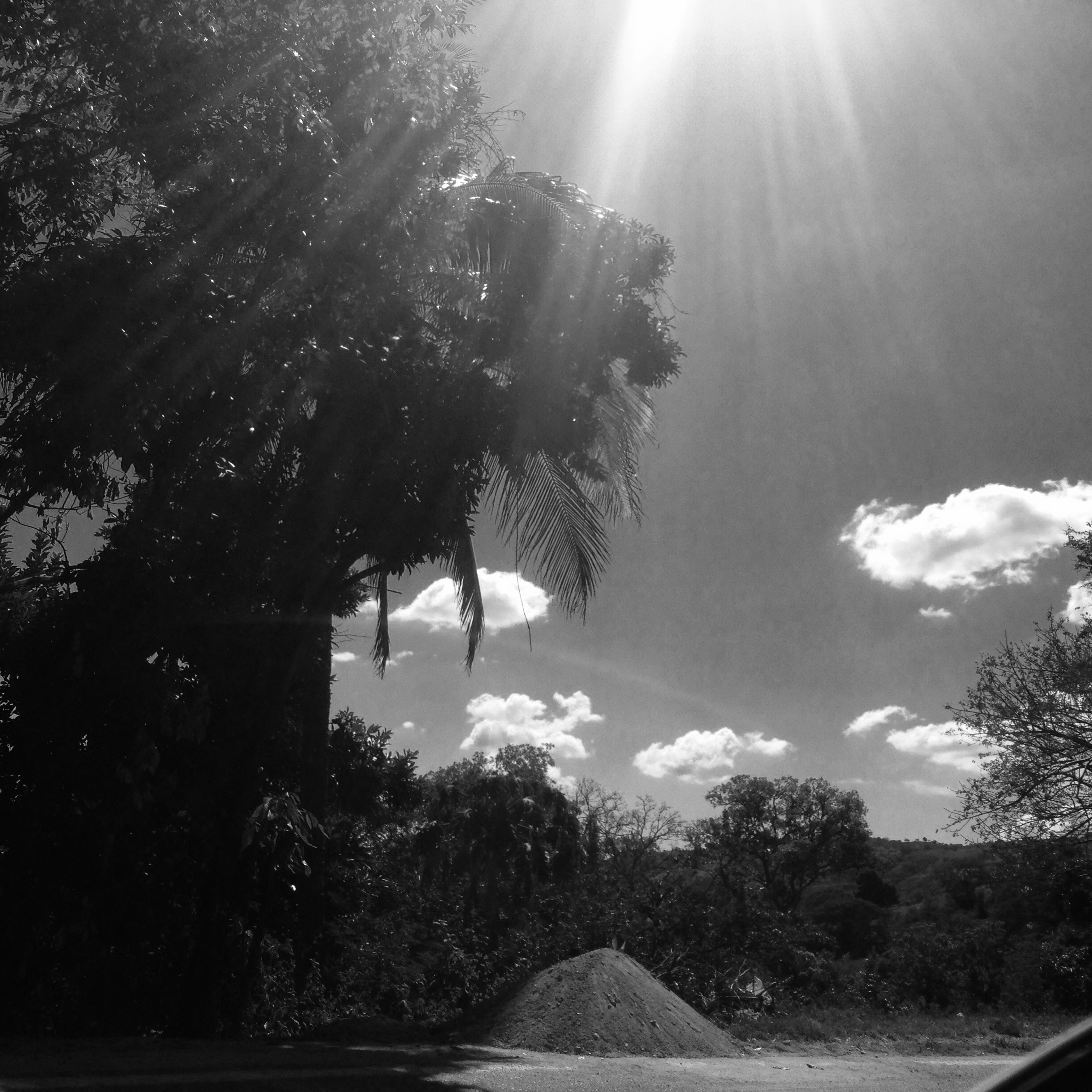 tree, sun, sunlight, transportation, sunbeam, sky, road, the way forward, growth, lens flare, nature, sunny, tranquility, day, no people, outdoors, cloud - sky, beauty in nature, diminishing perspective, tranquil scene