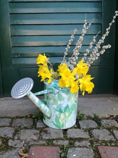 Blooming Catkin Daffodils Day Easter Decoration Enjoying Life Flower Flower Arrangement Fragility Garden Decoration Garden Flowers No People Outdoors Palmkätzchen Plant Spring Decoration Spring Flowers Springtime Watering Can Wateringcan Weidenkätzchen Yellow Art Is Everywhere Paint The Town Yellow