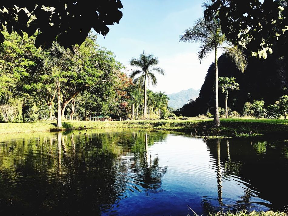Tam Wua Forest Monastry วัดป่าถ้ำวัว Tree Reflection Water Nature Sky Lake Day Tranquility Growth Outdoors Tranquil Scene Beauty In Nature Palm Tree No People Green Color Scenics