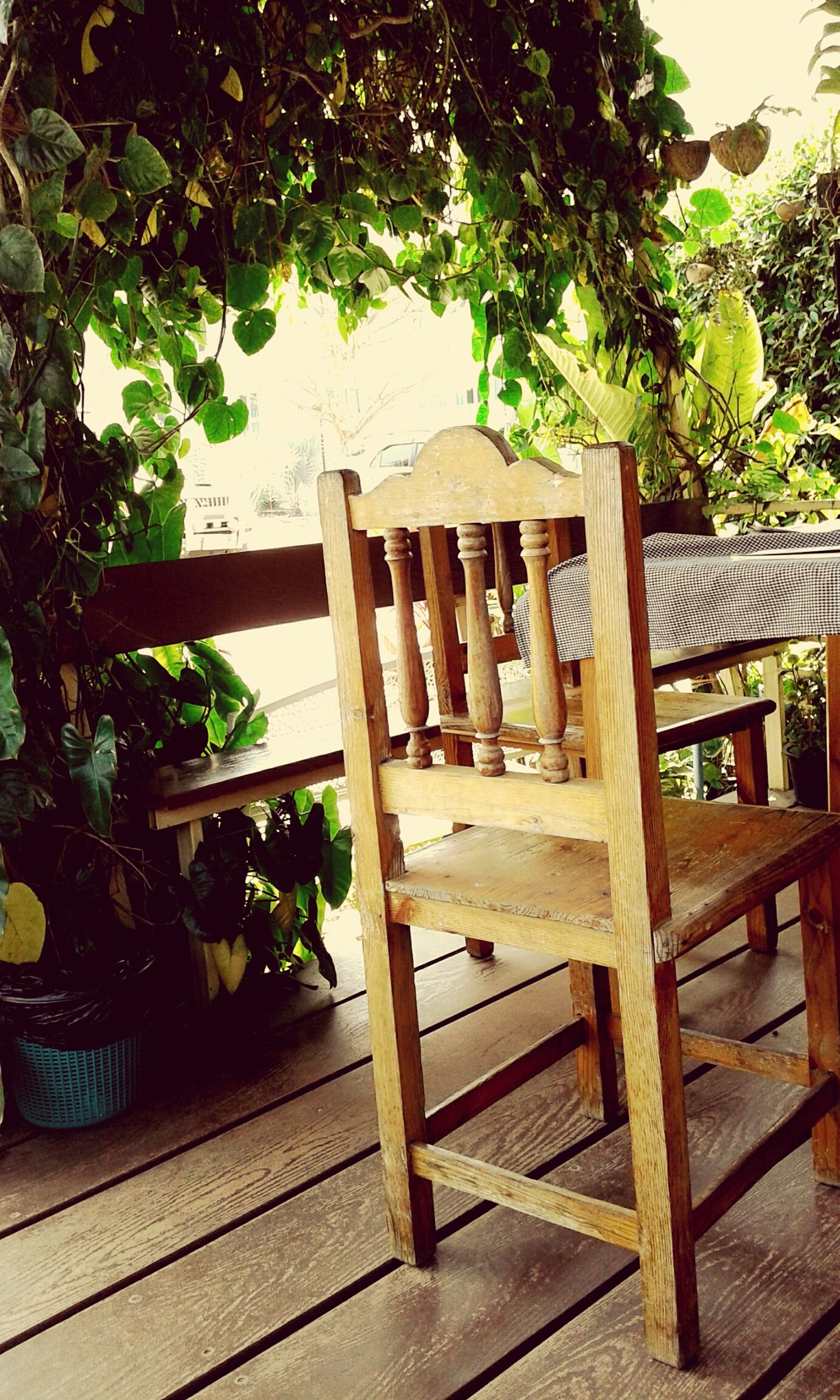 wood - material, wooden, green color, wood, plant, table, tree, growth, railing, potted plant, sunlight, day, high angle view, no people, indoors, nature, leaf, steps, plank