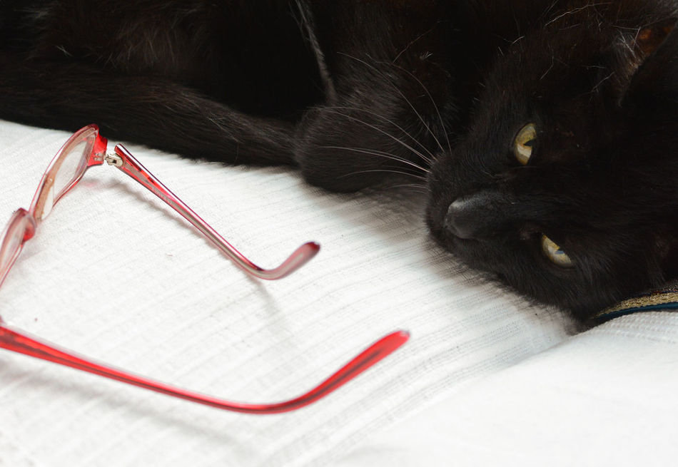 Smart cat Animal Themes At Home Black & White Black Cat Black Cats Are Beautiful Black Color Cat Lovers Cats Cats Of EyeEm Cats 🐱 Close-up Feline Glasses One Animal Portrait Of A Cat Smart