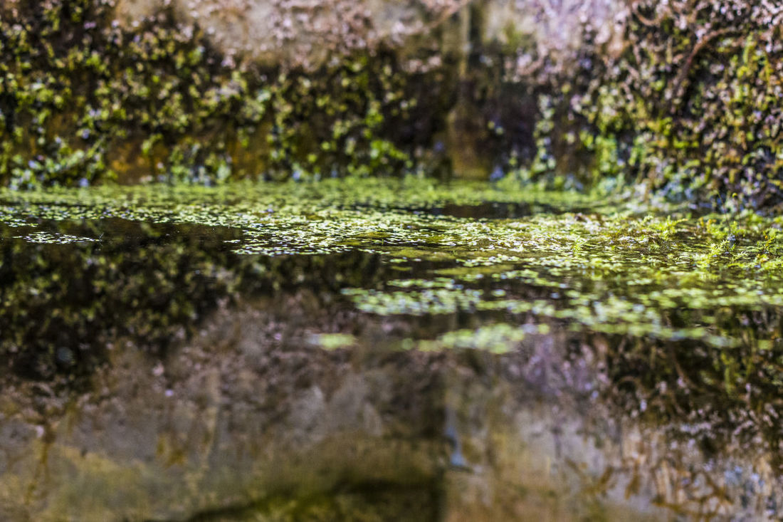 Basin Beautiful Nature Beauty In Nature Clear Water Dirt Dirty Dirty Mirror EyeEm Best Shots Fish Green Grunge Lake Lush Foliage Melancholy Nature Nature Photography Plant Plants Plants And Flowers Pond Pool Reflection Swamp Water Water Plants