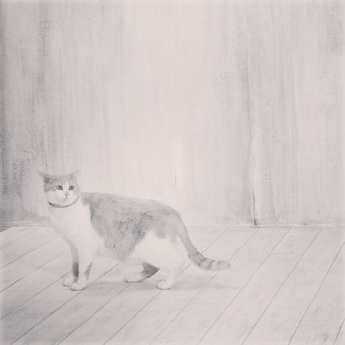 Jerrycat , Cat , Thecat