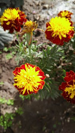 Flower Nature Beauty In Nature Fragility Flower Head Petal Freshness Pollen Plant Outdoors Blooming Growth Day Close-up No People Zinnia