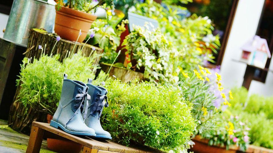 Boots Taking Photos Enjoying Life Aremadeforwalkin Lavenderfarm Taiwan