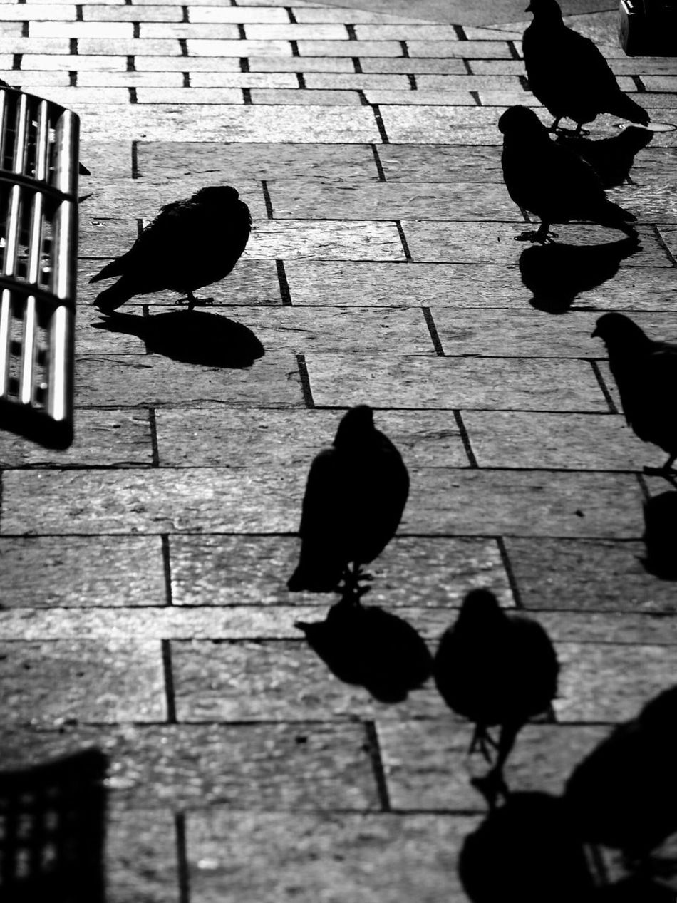 Animal Themes Bird Outdoors Day Animals In The Wild No People Water Perching Streetphotography Streetphoto_bw Pigeon Pigeonslife Pigeons Everywhere Welcome To Black