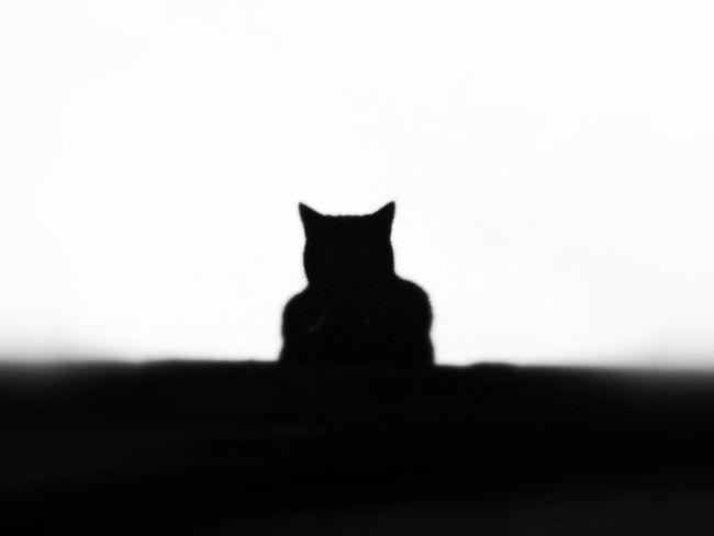 Black & White Cat Animals EyeEm Best Edits