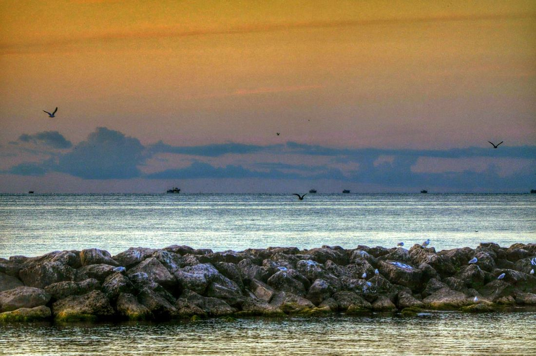 Hanging Out Taking Photos Enjoying Life Share Your Adventure My Best Photo 2015 Nature On Your Doorstep Nature At Work Landscape Nature Photography Scenery_collection Showcase April Lake Erie Beach Erie Pennsylvania Sunrise_sunset_aroundworld