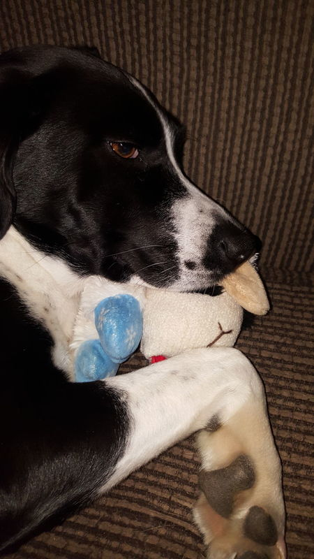 Showcase: February -Ivey- Holding Her Baby Early Morning Sleepy Head Still Together Christmas Present Holding On Strong Dog With Lamb Toy Dog❤ Pure And Untouched (raw Image) No Edit / No Filter