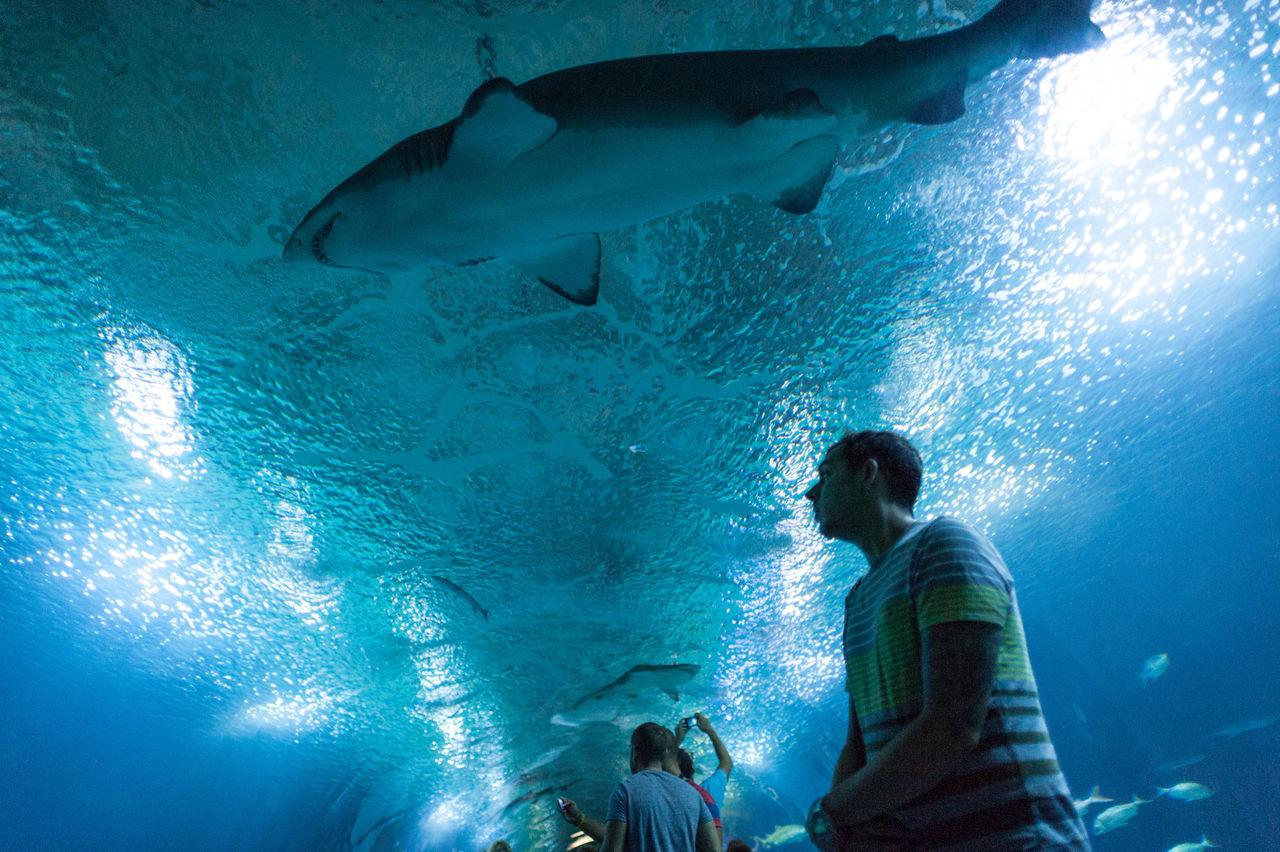 Beautiful stock photos of shark, Animal Themes, Aquarium, Captivity, Day