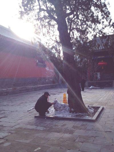 Spring Snow Engraving People China Enjoying Life Sun Happiness Sheep DIY