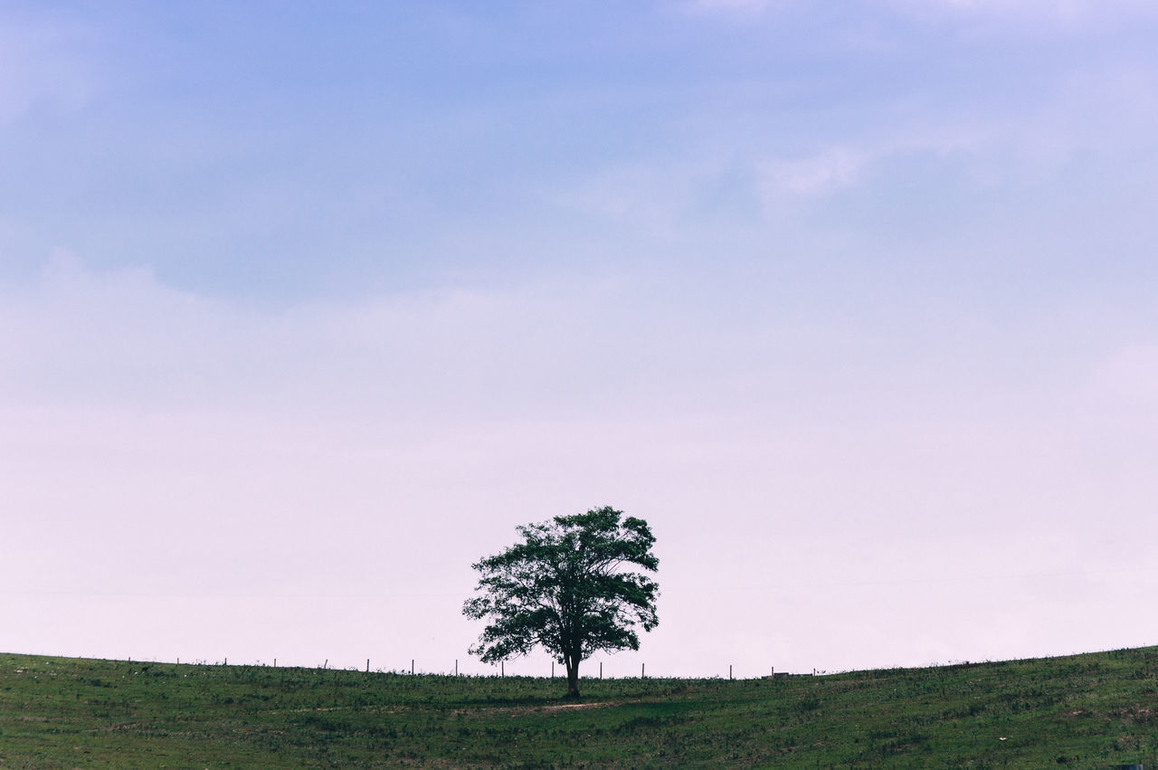 Minimal Beauty In Nature Day Field Grass Growth Horizon Over Land Isolated Landscape Lone Nature No People Outdoors Scenics Single Tree Sky Tranquil Scene Tranquility Tree