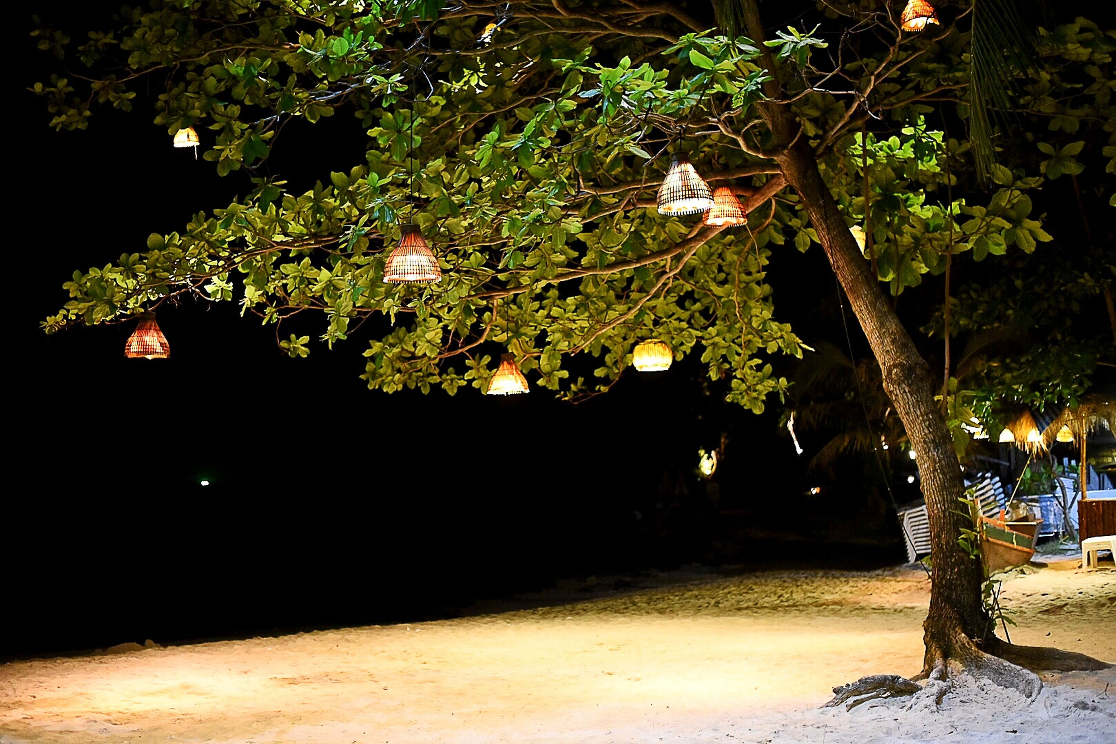 🌳🌿 Taking Photos Nightphotography Beach Life Nightlife Hello World Hanging Out