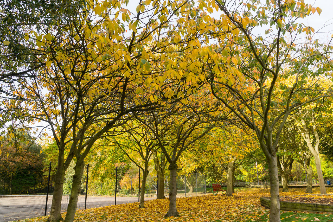 Autumn time in England in local parks with play areas for children Autumn🍁🍁🍁 Blue Sky White Clouds Bushes Grass Leaves On The Ground Outdoors Photograpghy  Outdoors❤ Pathways Plants 🌱 Play Area Red Leaves🍂 Rural Scenes Tree Branches Against The Sky Trees Yellow Leaves