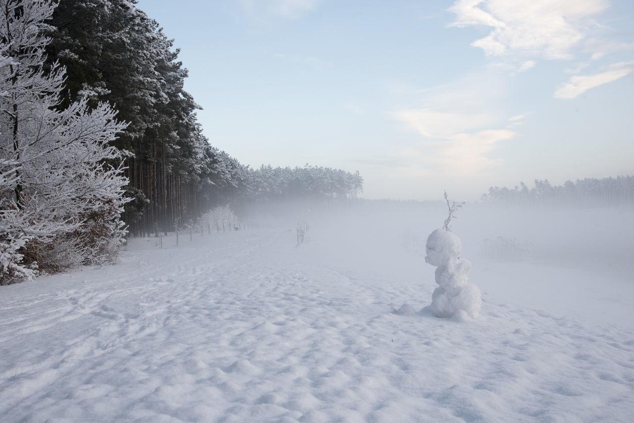 Beautiful stock photos of schneemann, cold temperature, tree, winter, snow