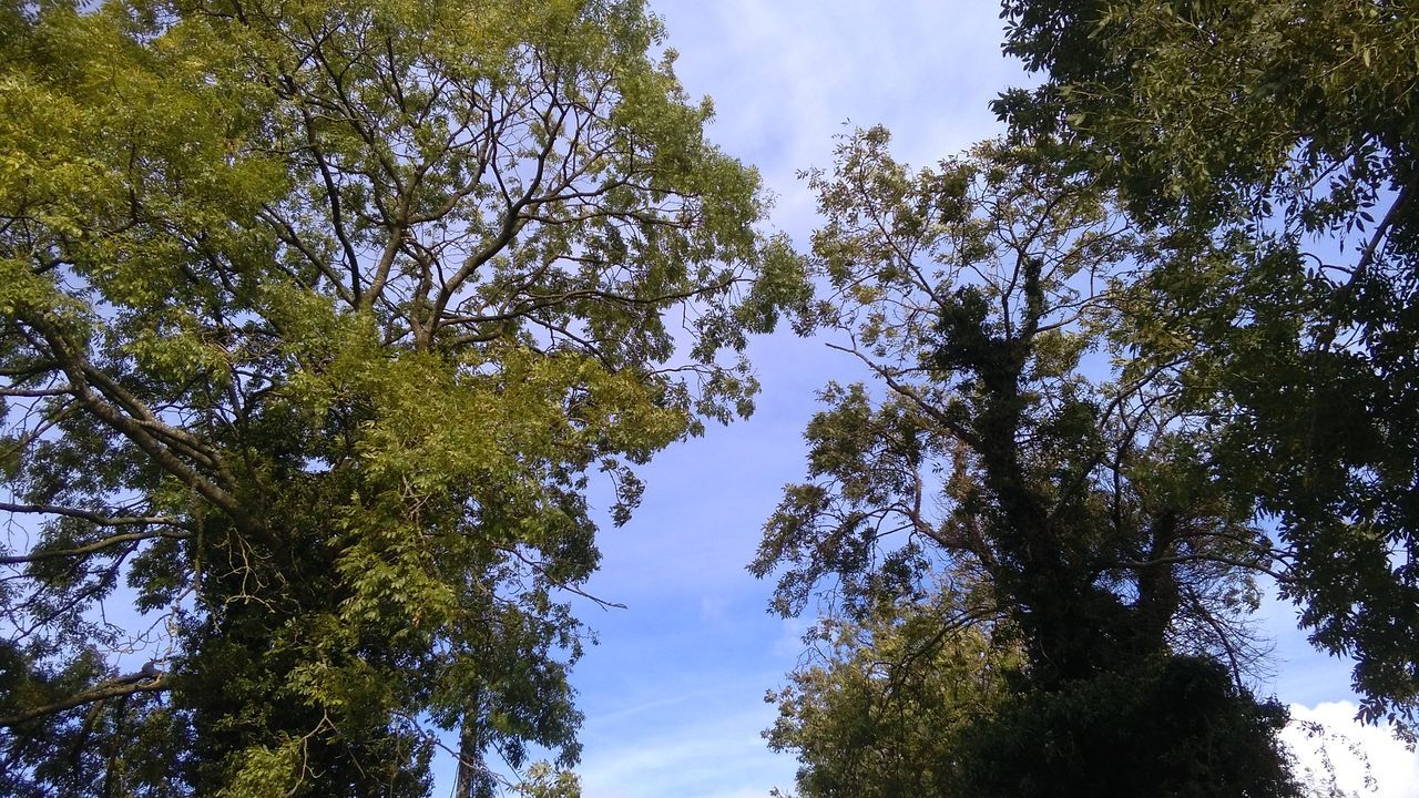 tree, nature, forest, low angle view, growth, beauty in nature, day, tranquility, sky, outdoors, blue sky, scenics, no people, leaf, adventure, branch