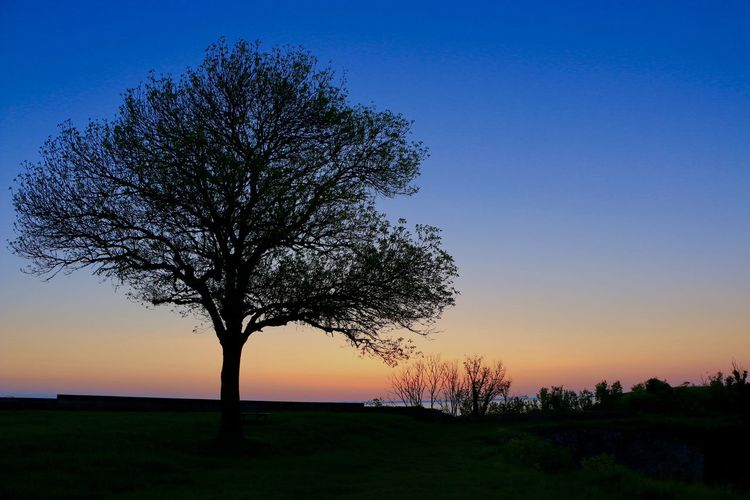 Château D'oleron Bare Tree Beauty In Nature Branch Clear Sky Day Field Grass Horizon Over Land Landscape Lever Du Jour Lone Nature No People Outdoors Scenics Silhouette Sky Sunrise Sunrise_sunsets_aroundworld Sunset Tranquil Scene Tranquility Tree Tree Trunk EyeEmNewHere Shades Of Winter