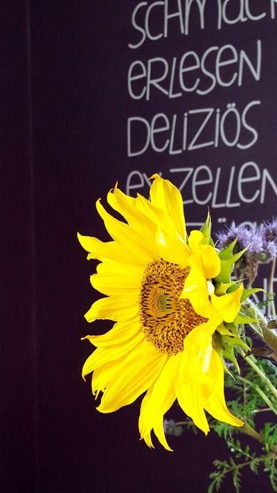 Autum Autumn Colors Sonnenblume Gelb Oktober2015 Flower